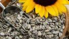 واردات دانه آفتابگردان آجیلی مجاز شد