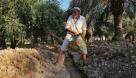 چراغ سبز سازمان آب و برق خوزستان به اصلاح قیمت آب بهای نخیلات