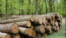 زراعت چوب در کشور دوباره رونق گرفت/ سود خالص ۹۰ میلیون تومانی در هر هکتار