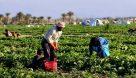 انتقاد از بی توجهی به کشاورزان در مناظره تلویزیونی ریاست جمهوری/ کشاورزان به برنامههای مشخص رای میدهند