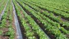 ۲.۲ میلیون هکتار زمین مستعد کشاورزی در خوزستان وجود دارد