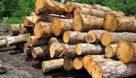 دستگیری سوداگران درختان جنگلی دز