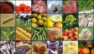 صادرات بیش از ۳۰۰ تن محصولات کشاورزی از اهواز