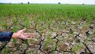 پرداخت خسارت ۸۰۰ میلیارد ریالی به کشاورزان آسیب دیده از خشکسالی