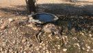 مرگ حیوانات تشنه در یک قدمی دز