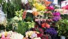 پیشبینی تولید ۴۲۰ میلیون شاخه گل و گیاه زینتی در خوزستان