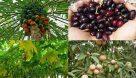 قوانین یک شبه برهم زننده تعادل بازار محصولات کشاورزی