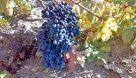 ارمغان طبیعت شیمبار برای عشایر اندیکا