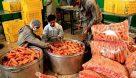 تقاضای۳۰ برابری عامل کمبود هویج در بازار اهواز است/ تکذیب فروش هویج با کارت ملی