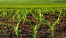 ۱۴ طرح کشاورزی در باغملک به بهره برداری رسید
