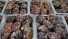 آمادگی مراکز خرید خرما در خوزستان